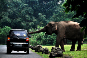 Paket Wisata Surabaya Taman Safari Bromo Batu Malang