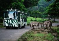 Paket Wisata Surabaya Taman Safari Bromo Batu Malang 3 Hari 2 Malam